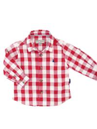 Darcy Brown Hemd in Rot/ Weiß